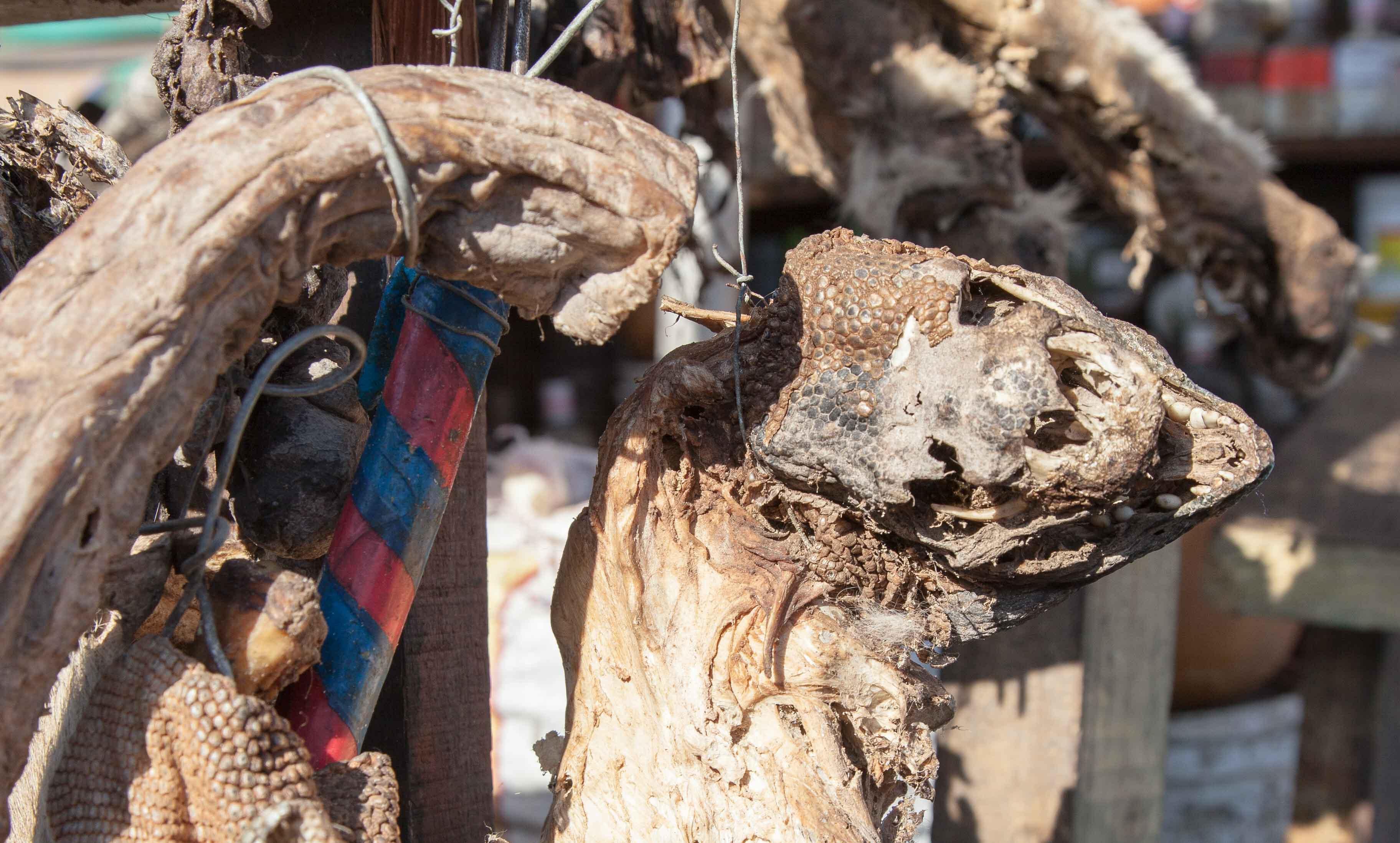 Ein getrockneter Schlangenkopf. Das Fett einer Python soll helfen, offene Wunden zu heilen