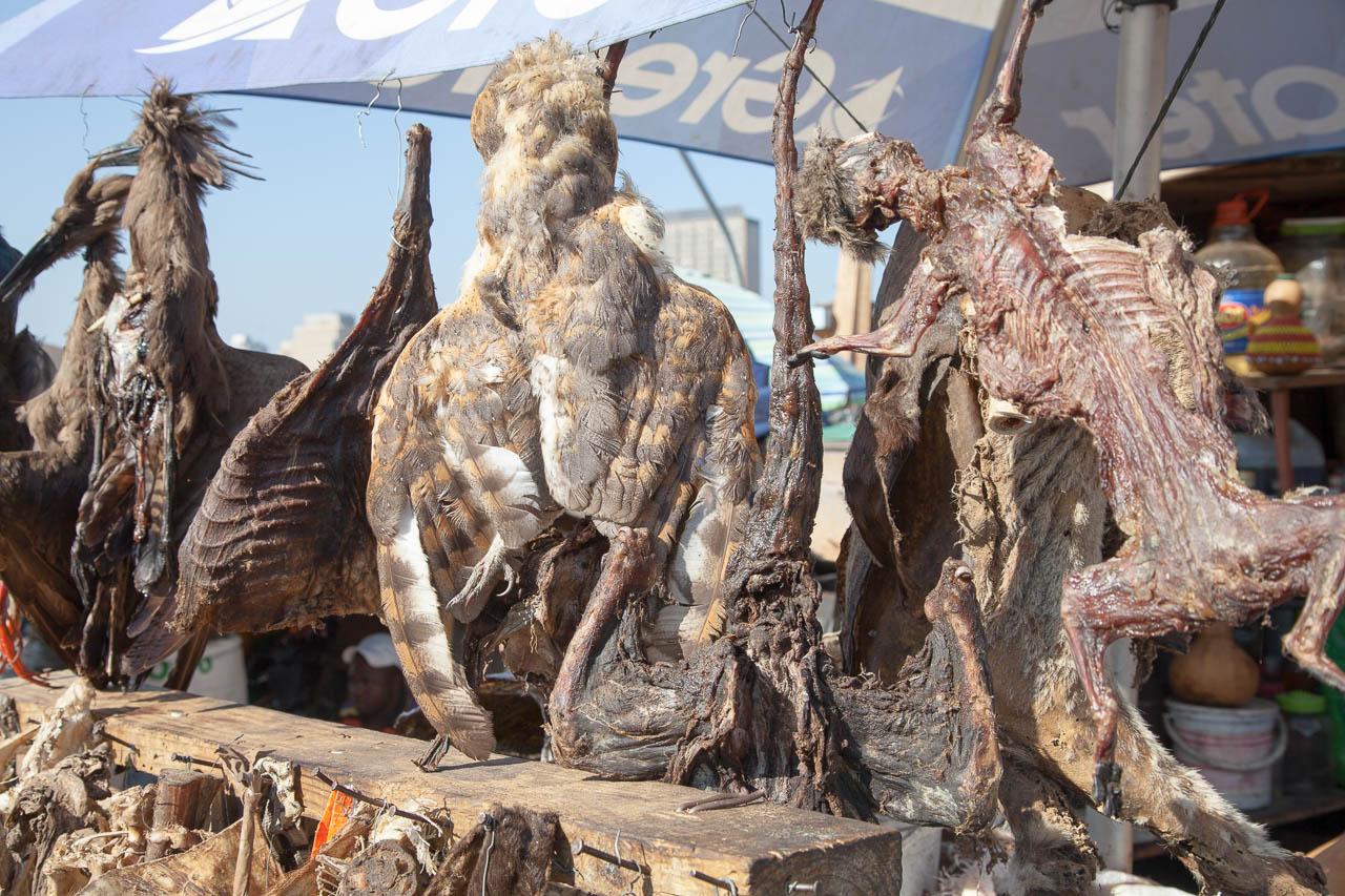 Getrocknete Kleintiere, Gefieder, Innereien. Zutaten für traditionelle afrikanische Medizin auf dem Markt von Durban.