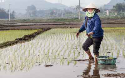 Gesichter Vietnams