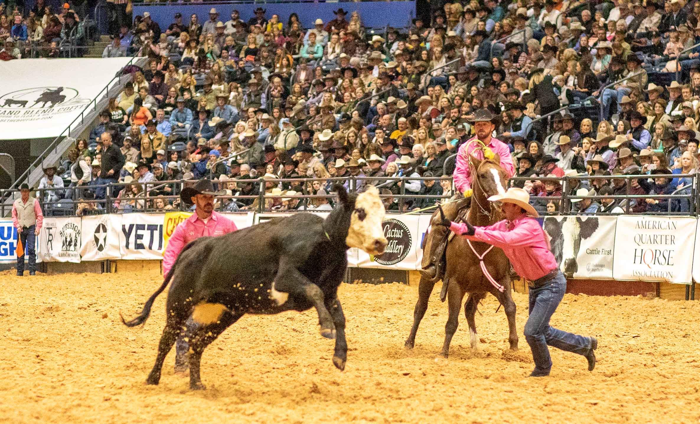 Ranch-Rodeo in Amarillo. So leicht lässt sich diese Kuh nicht stoppen