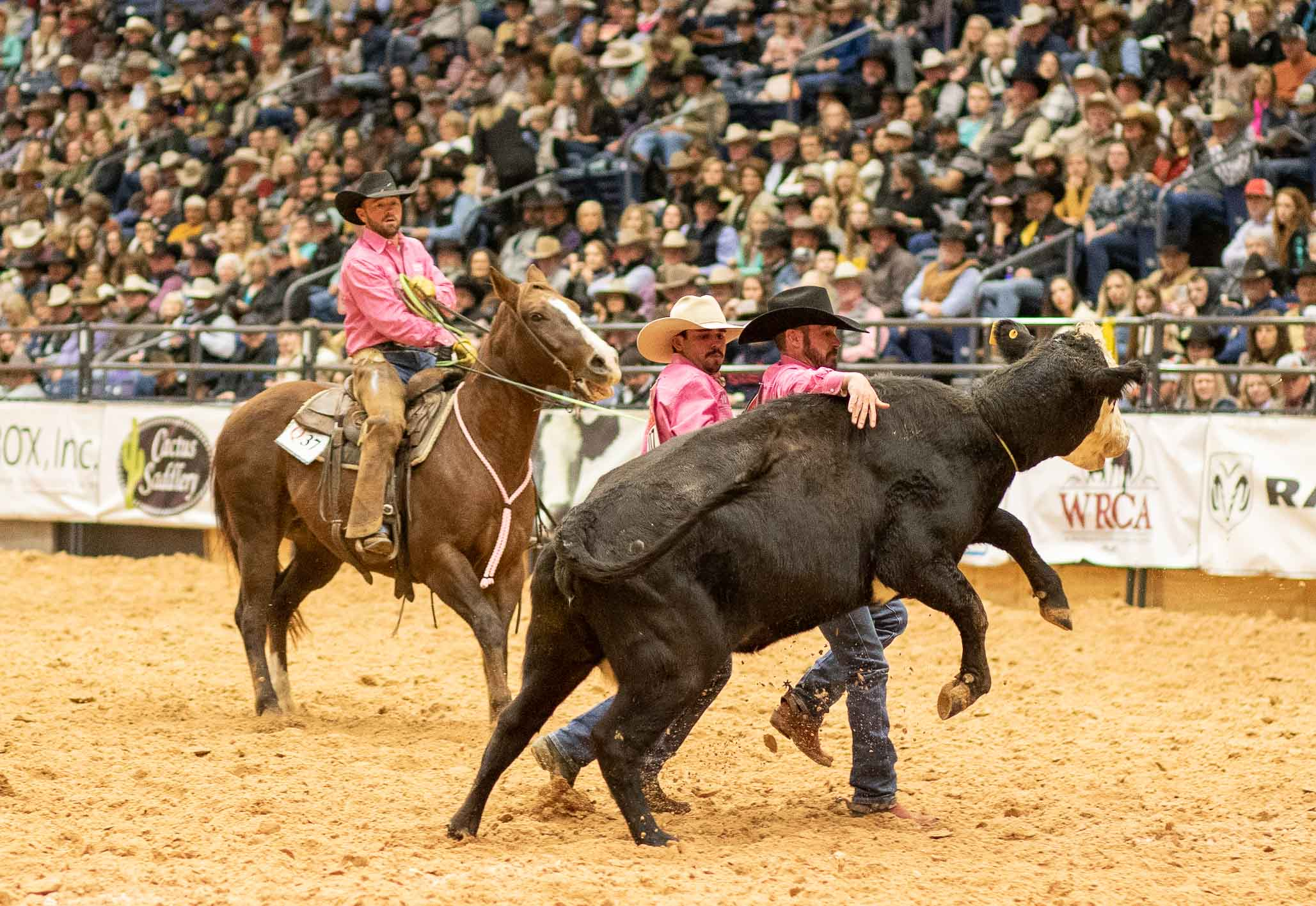 Für Reiter, Rund und Pferd ist das Rodeo ein Gewaltakt, der nicht ohne Blessuren abgeht.