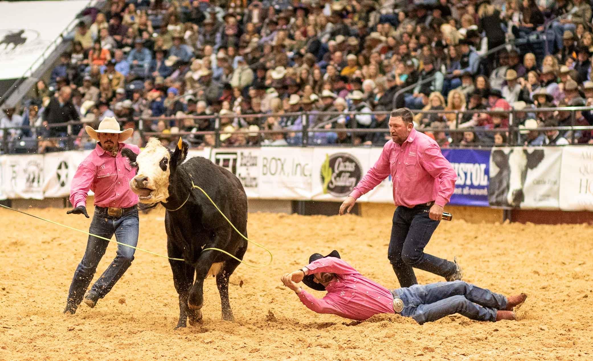 """Die Kuh bleibt Sieger. Sie kommt ungemolken davon. """"Verrücktes Vieh"""", sagt der Stadionsprecher."""